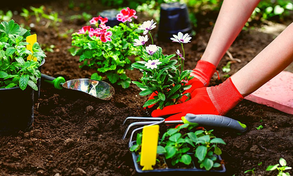 how to start a garden as a beginner
